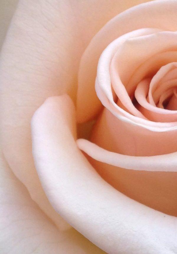 Actualité Dior, rose